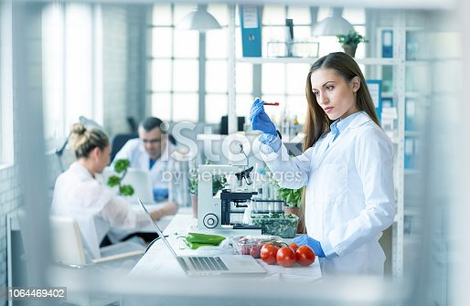 Female biologist analyzing a brunch of tomatoes in laboratory.