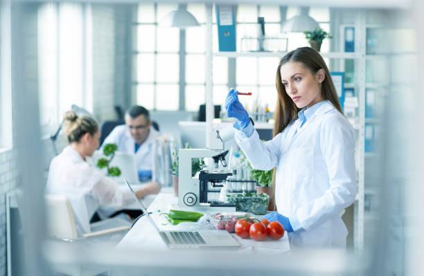 female biologist analyzing tomatoes in laboratory - bio food foto e immagini stock