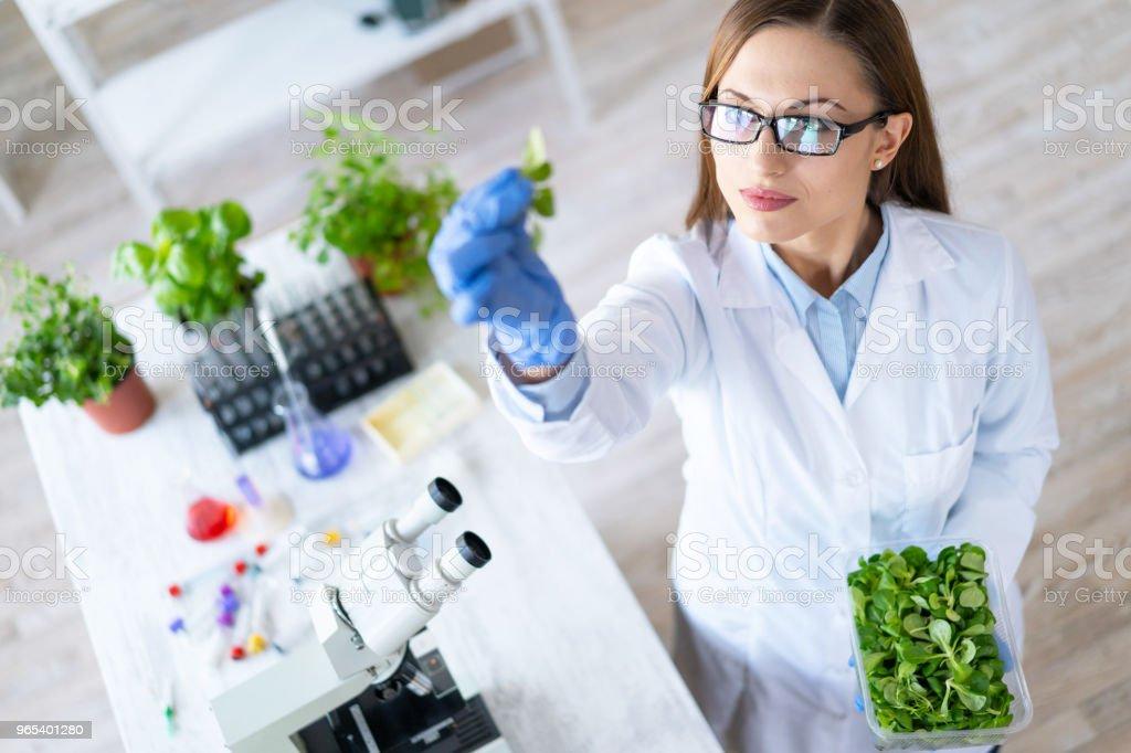 Female biologist exploring plant in laboratory zbiór zdjęć royalty-free