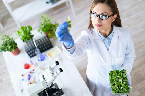여성 생물학 실험실에서 식물 탐험 DNA에 대한 스톡 사진 및 기타 이미지