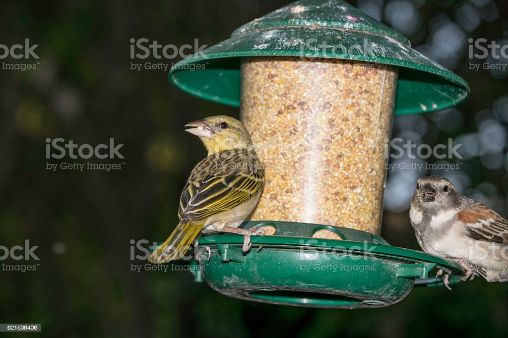 Female birds foto stock royalty-free