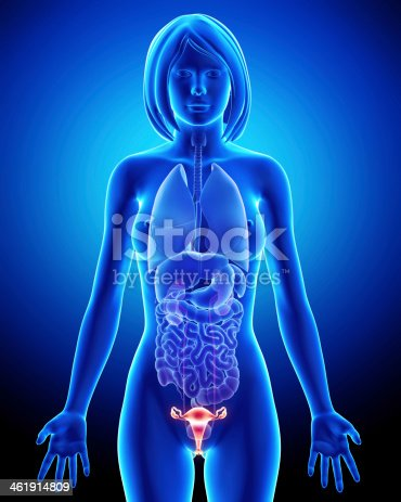 istock Female bladder anatomy in blue x-ray loop 461914809