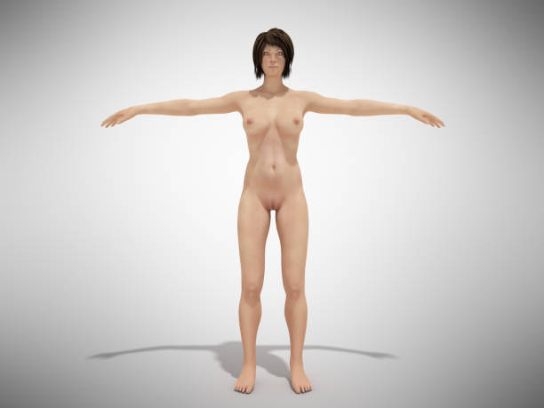 a female body anatomy for books 3d render on white - vagina stock photos and pictures