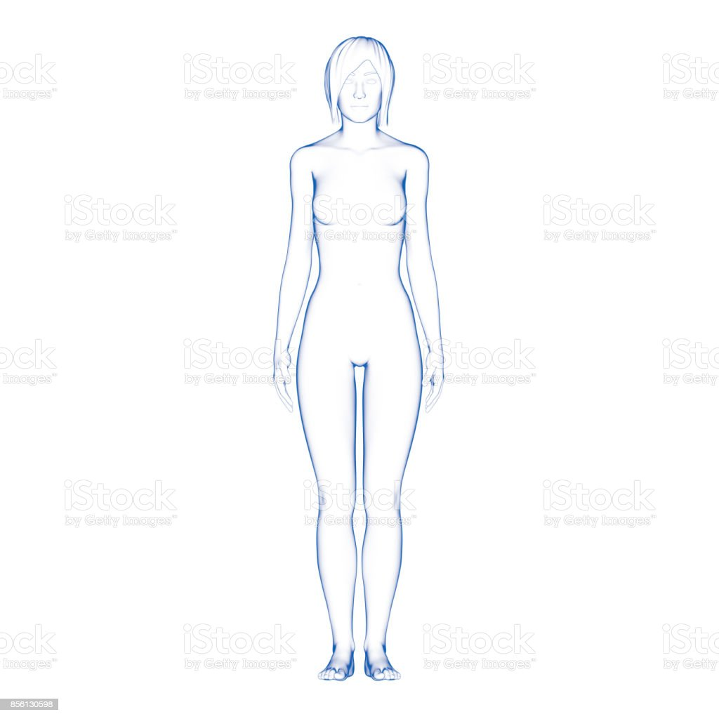 Female Body Illustration stock photo
