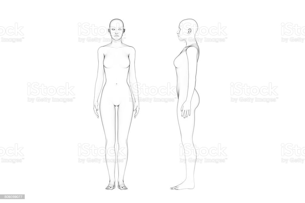 Female Body Proportions, Line Art, White Background stock photo