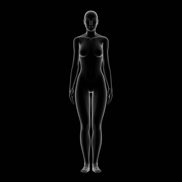 female body shape - human body 3d stock photos and pictures