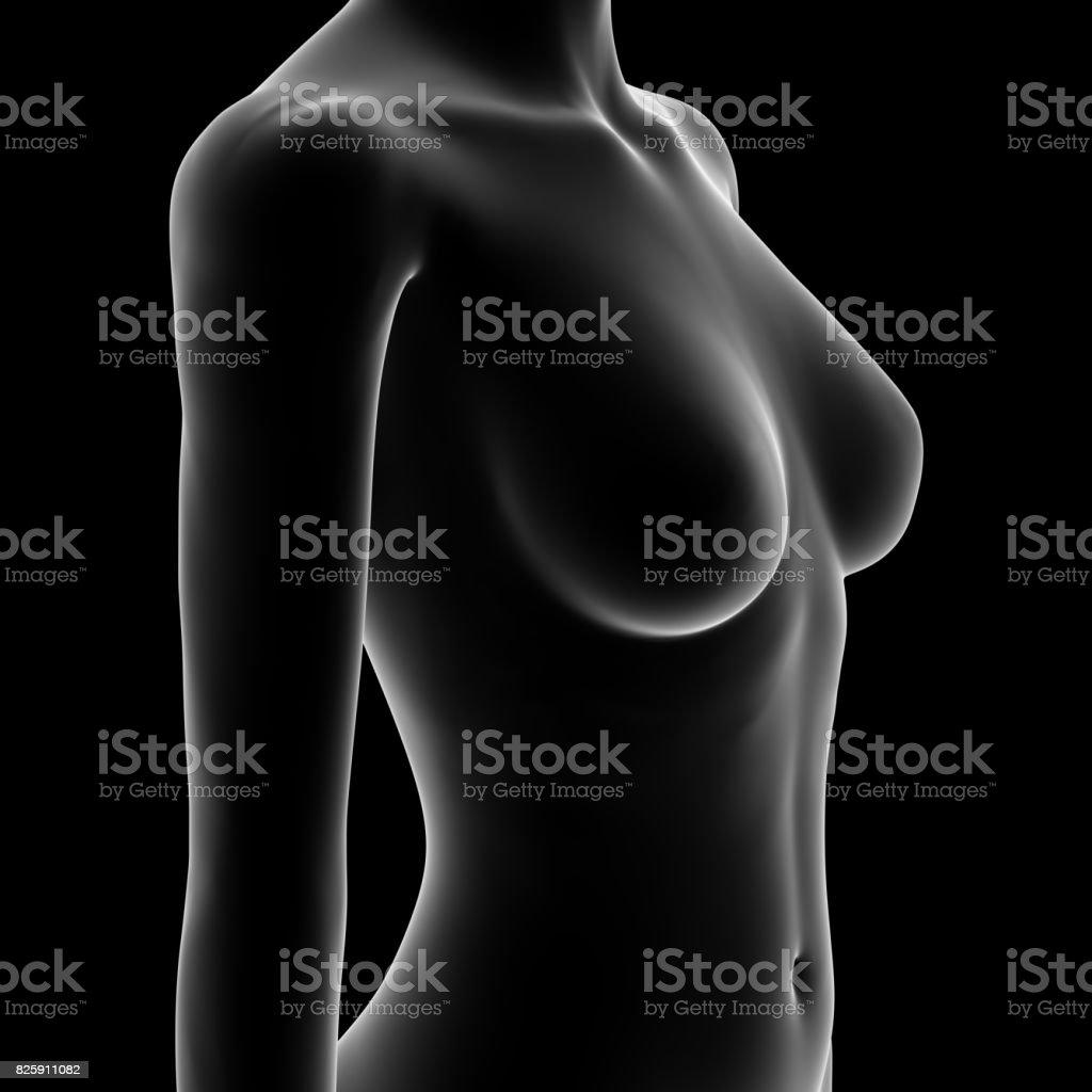 Female Body Shape stock photo