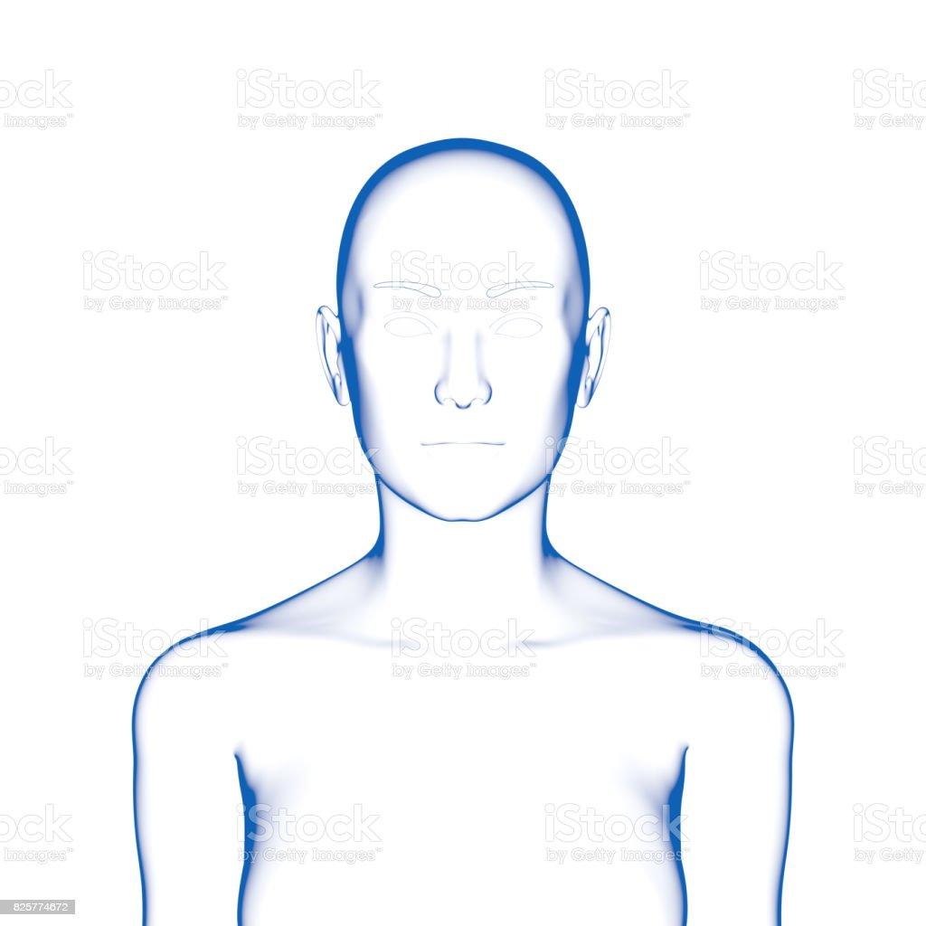 Weibliche Körperform Oberkörper Stock-Fotografie und mehr Bilder von ...