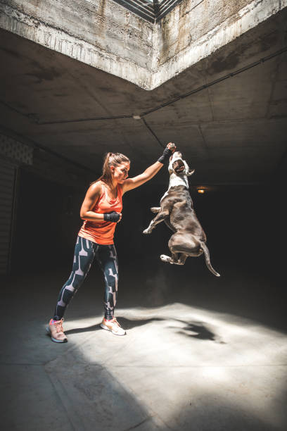 Female boxer and cute dog pit bull terrier picture id1045066784?b=1&k=6&m=1045066784&s=612x612&w=0&h=quhiexz4daogqymhiangznolrrkuwseh9ybt84mxnzi=