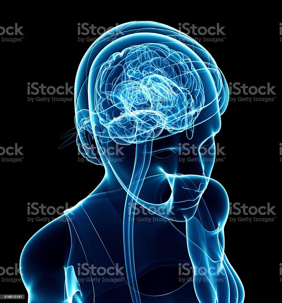 Female Brain Xray Anatomy Artwork stock photo | iStock