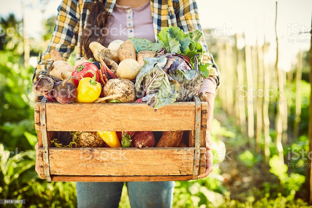 Female carrying freshly harvested vegetables in crate at farm stock photo