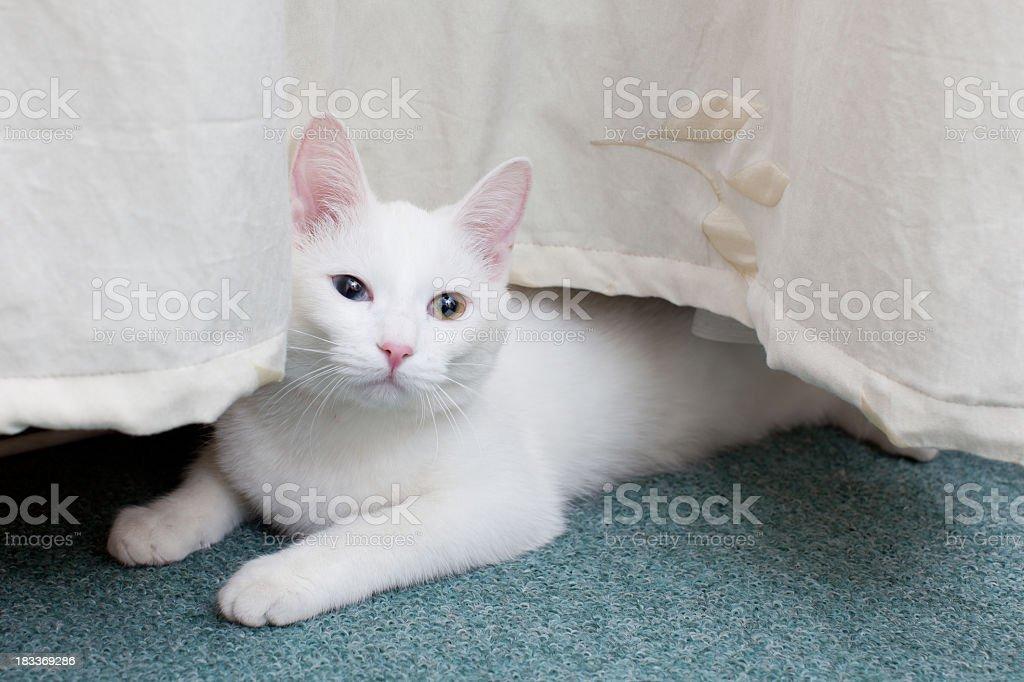 Female CAT: Portrait-naughty stock photo