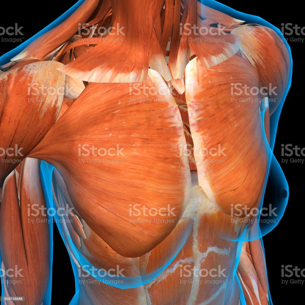 Female Chest Muscles X-ray View on Black stock photo