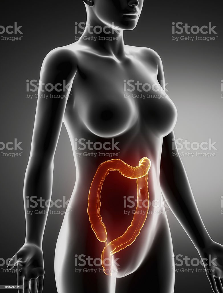 Female COLON anatomy x-ray lateral view royalty-free stock photo