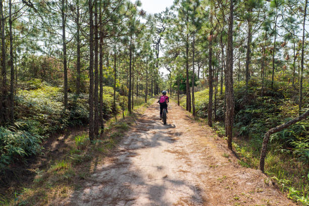 Female cyclist cycling on dirt road through pine forest stock photo