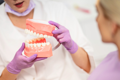 Close up of a female dentist holding artificial jaw showing how it works to a women having dental inspection.