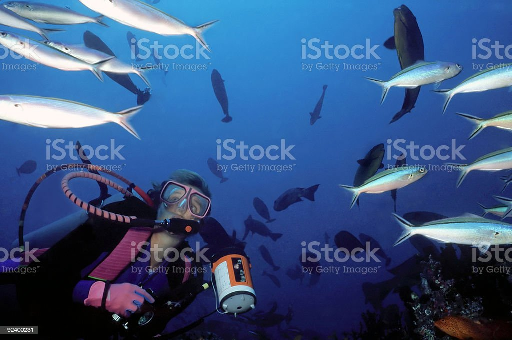 Female diver and a swarm of fish royalty-free stock photo