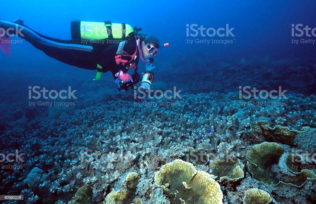 Female Diver and Indo corals stock photo
