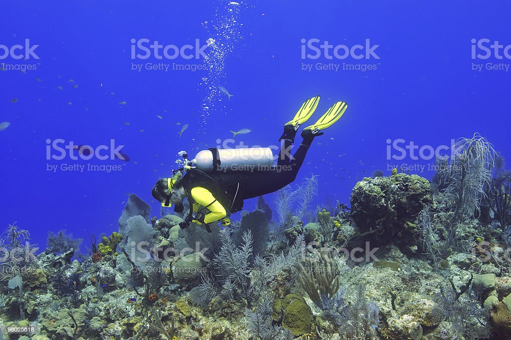 Female diver explores reef royalty-free stock photo