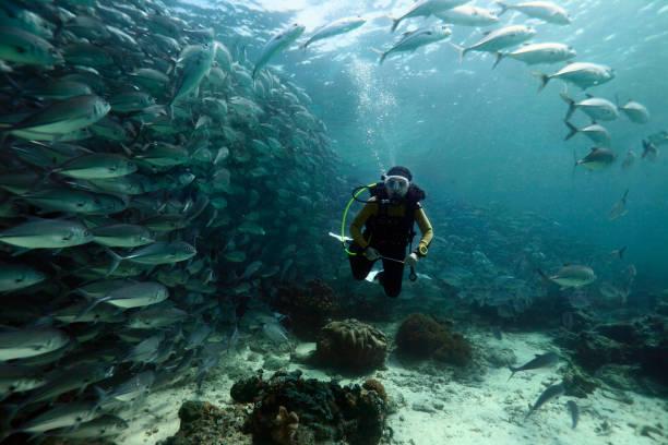 Female diver in a school of fish. stock photo