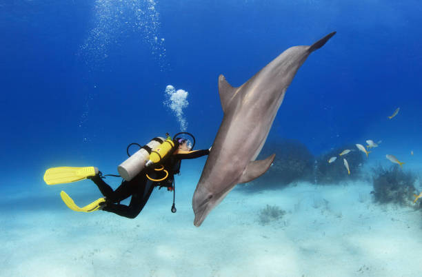 Female diver plays with dolphin stock photo