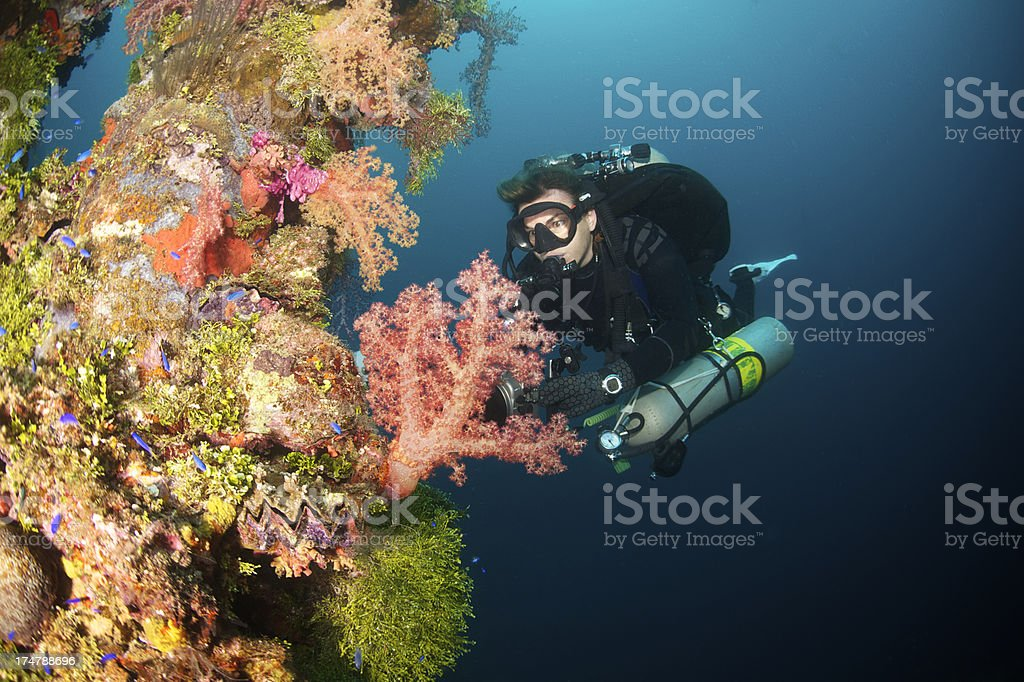 Female Diver with Soft Coral stock photo