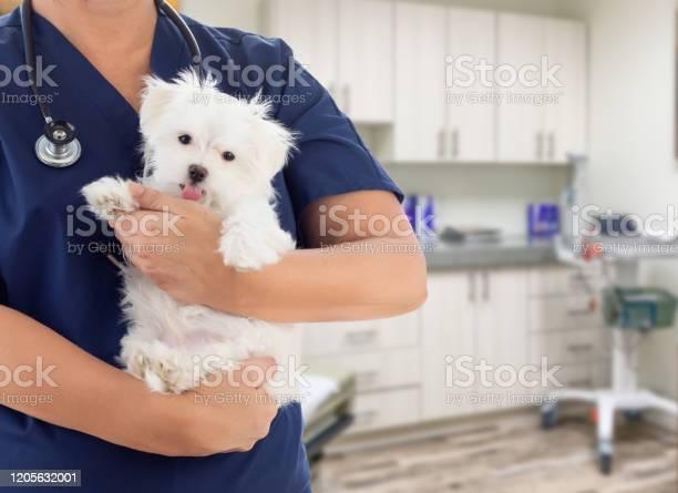 Female doctor or nurse veterinarian with small puppy in office picture id1205632001?b=1&k=6&m=1205632001&s=612x612&h=e9g0ajqqvm2xh l8jvmimkejcx fcsjeh7tupmjueci=