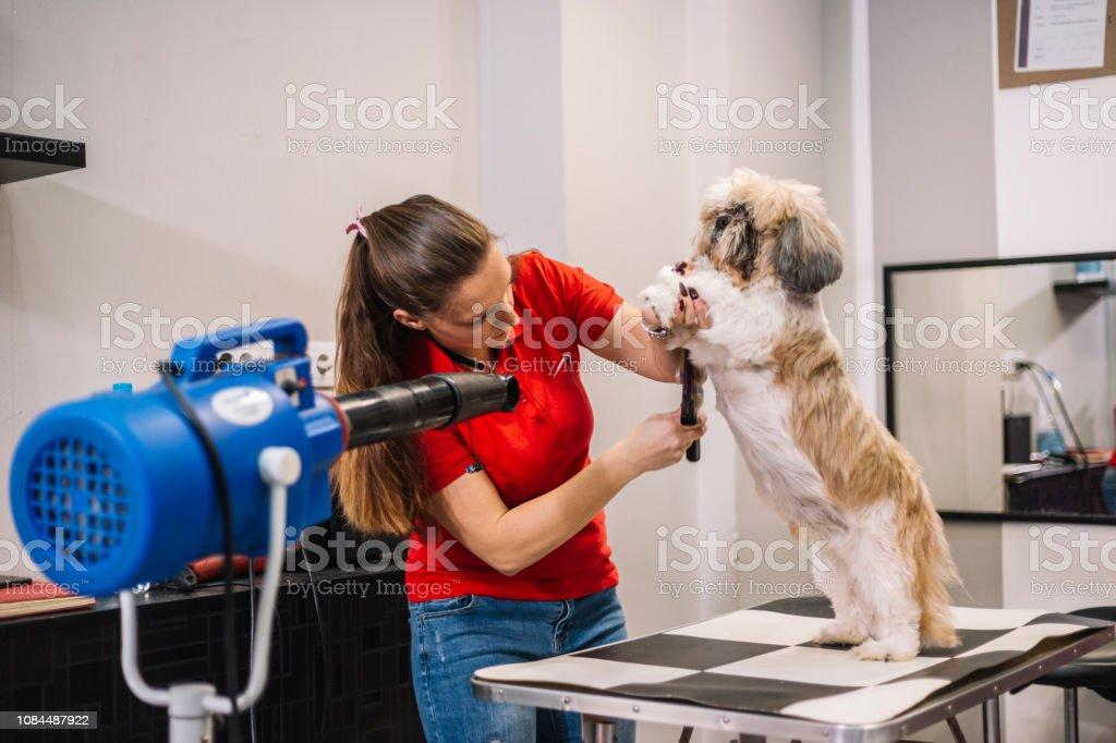 Female dog groomer brushing a small dog