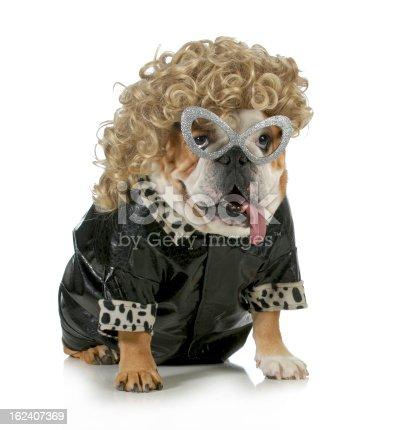istock female dog 162407369