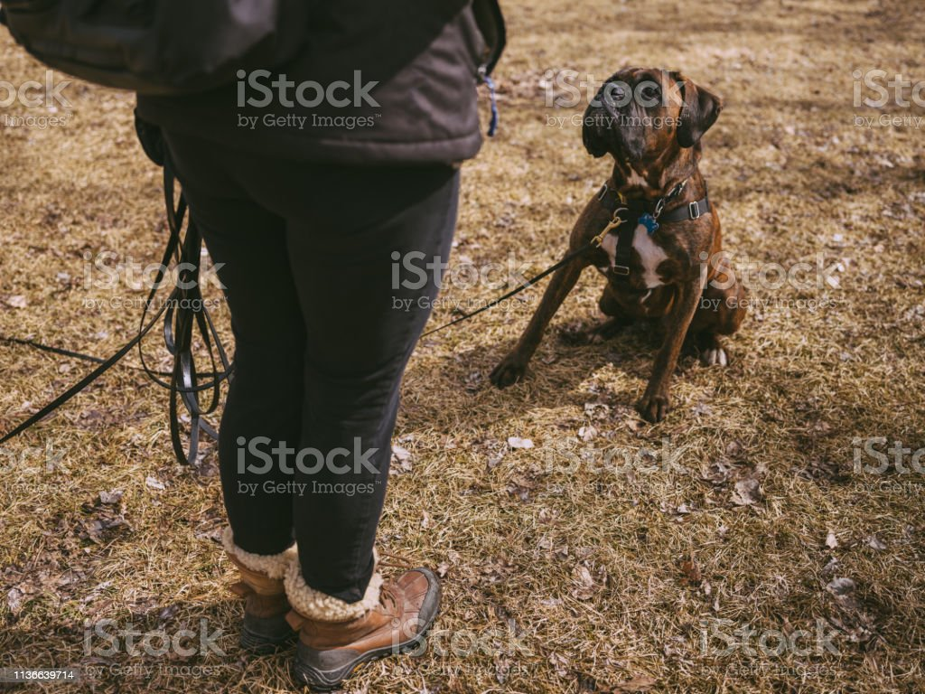 Caucasian woman, dog trainer with her brindle boxer dog in the park....