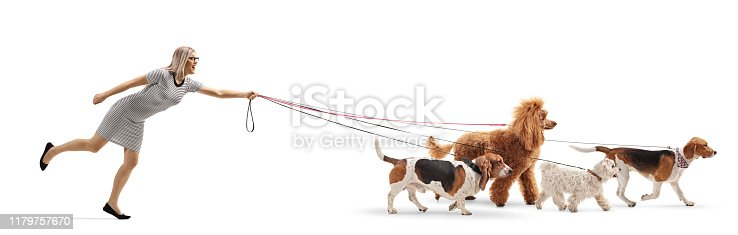 Full length profile shot of a female dog walker pulled by dogs on leash isolated on white background