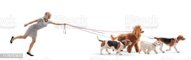 Female dog walker pulled by dogs on leash picture id1179757670?b=1&k=6&m=1179757670&s=612x612&h=sjt0s1cfleolwf2iwyjbits nljpmcm8fkkn6czblnw=