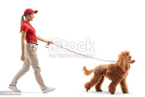 Full length profile shot of a female dog walker walking a red poodle isolated on white background