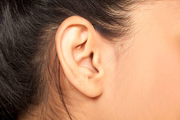 female ear - ear stock photos and pictures