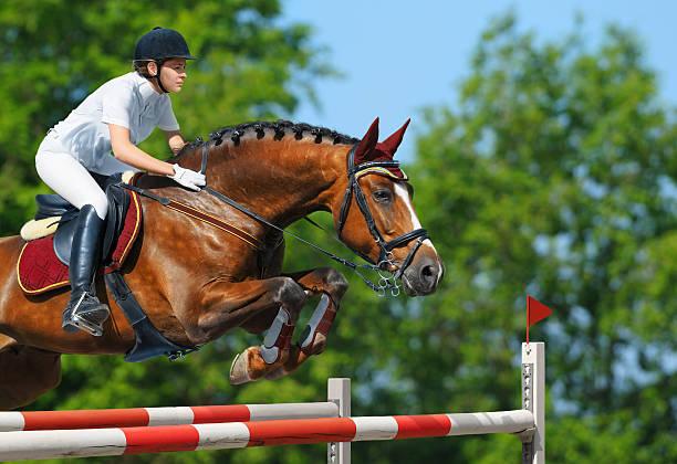 female equestrian and brown bay mare jumping - hästhoppning bildbanksfoton och bilder