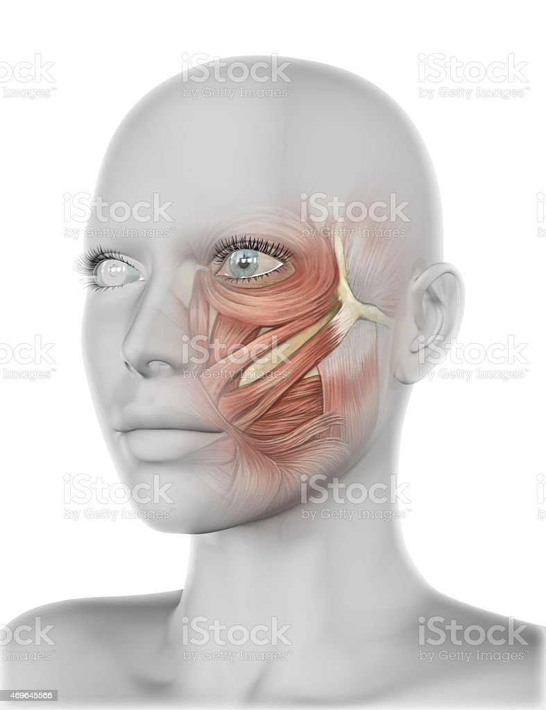 3d Female Face With Cheek Muscles Stock Photo & More Pictures of ...