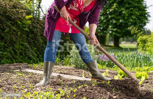 Female farmer digs in the garden and prepares the garden for planting