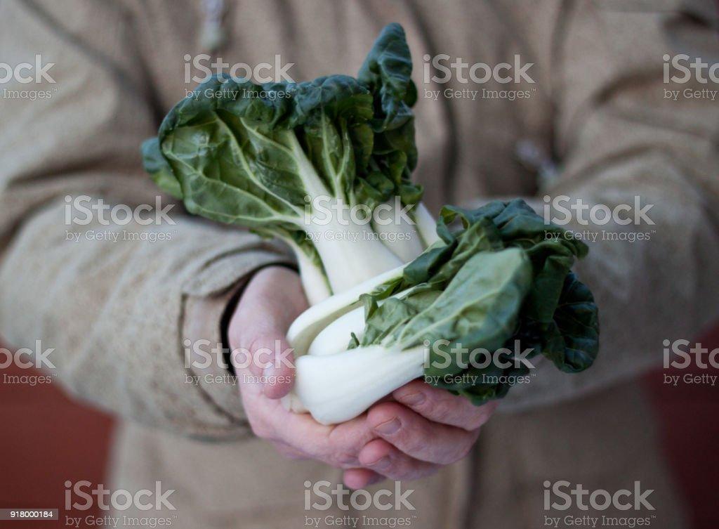 female farmer holding organic baby bok choy stock photo