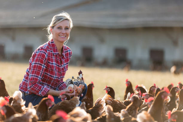 female farmer in farm with chicken female farmer in farm with chicken female animal stock pictures, royalty-free photos & images
