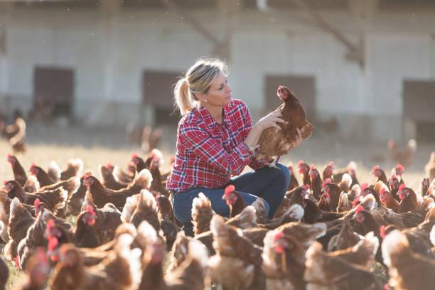 female farmer on poultry farm stock photo