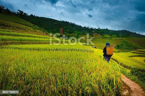 istock Female farmer on rice terrace 859756820