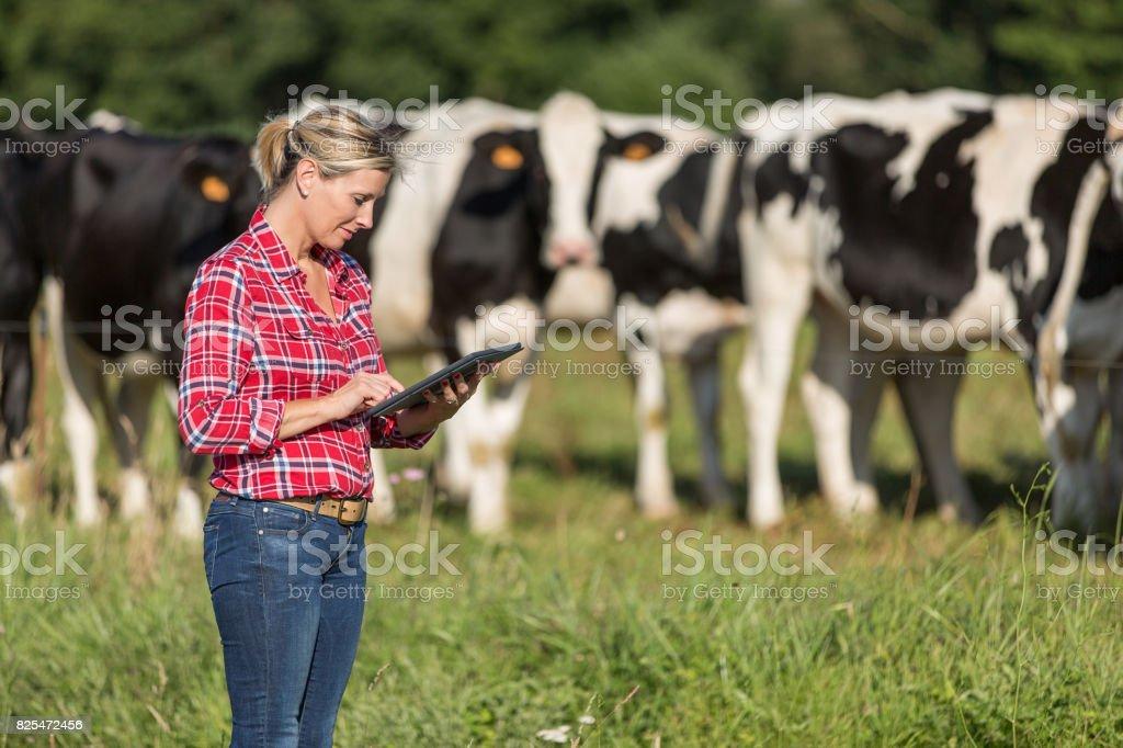 agricultrice fier de travailler avec son troupeau de vaches - Photo