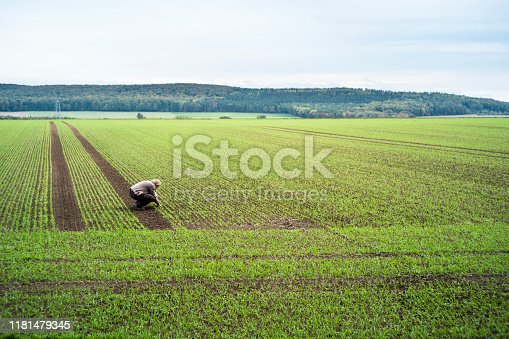 winter wheat, woman, farmer, outdoors, field, sowing