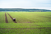 winter wheat, woman, farmer, outdoors, field, sowing