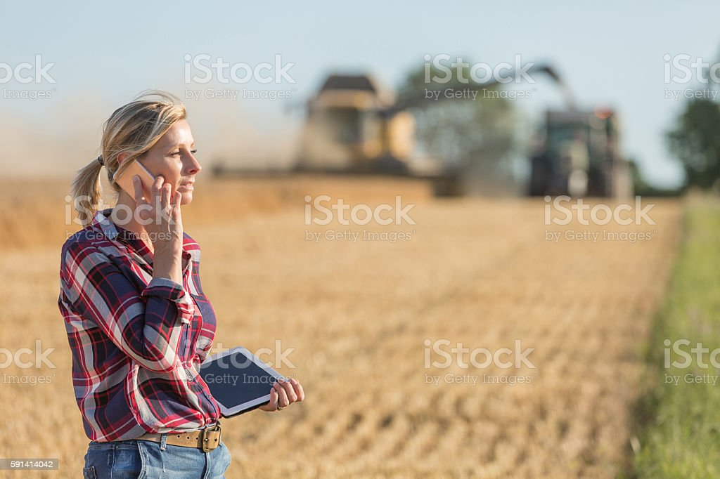 Female farmer using digital tablet in the wheat field - Photo