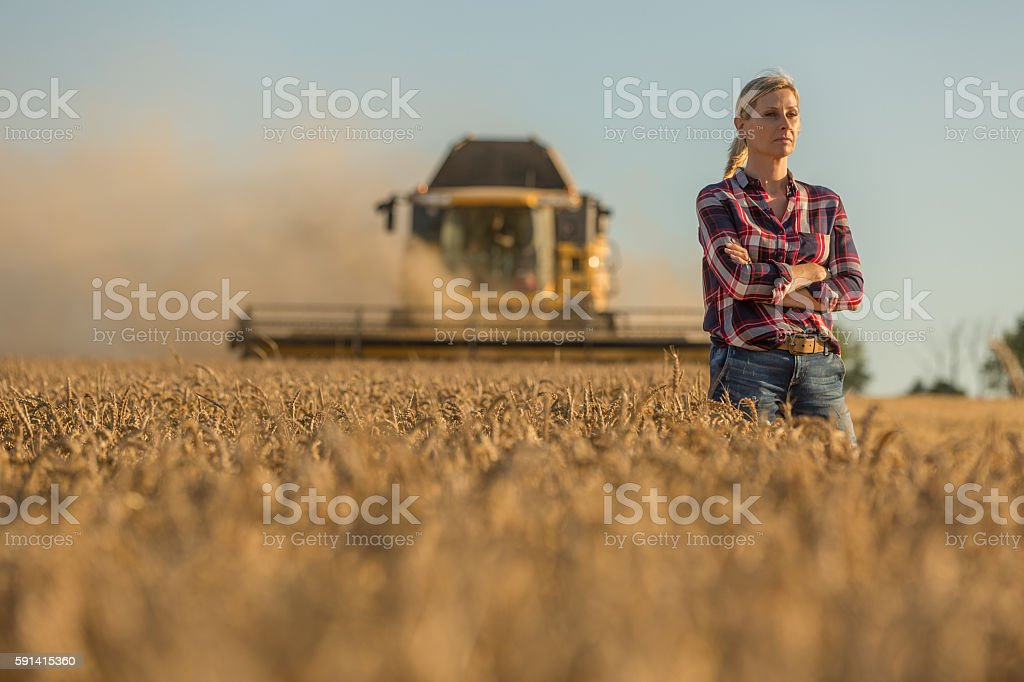 Female farmer walking through field checking wheat crop - foto stock