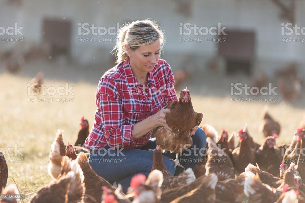les agricultrices chez les poules pondeuses ferme - Photo
