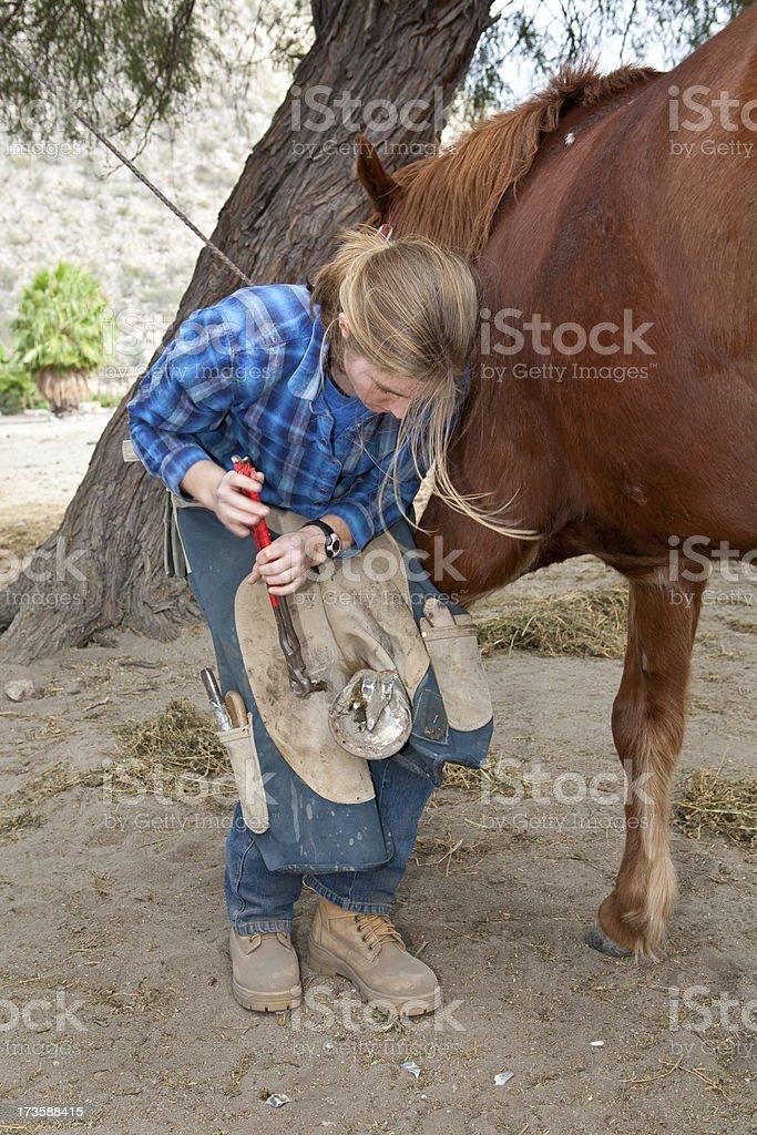 female farrier stock photo