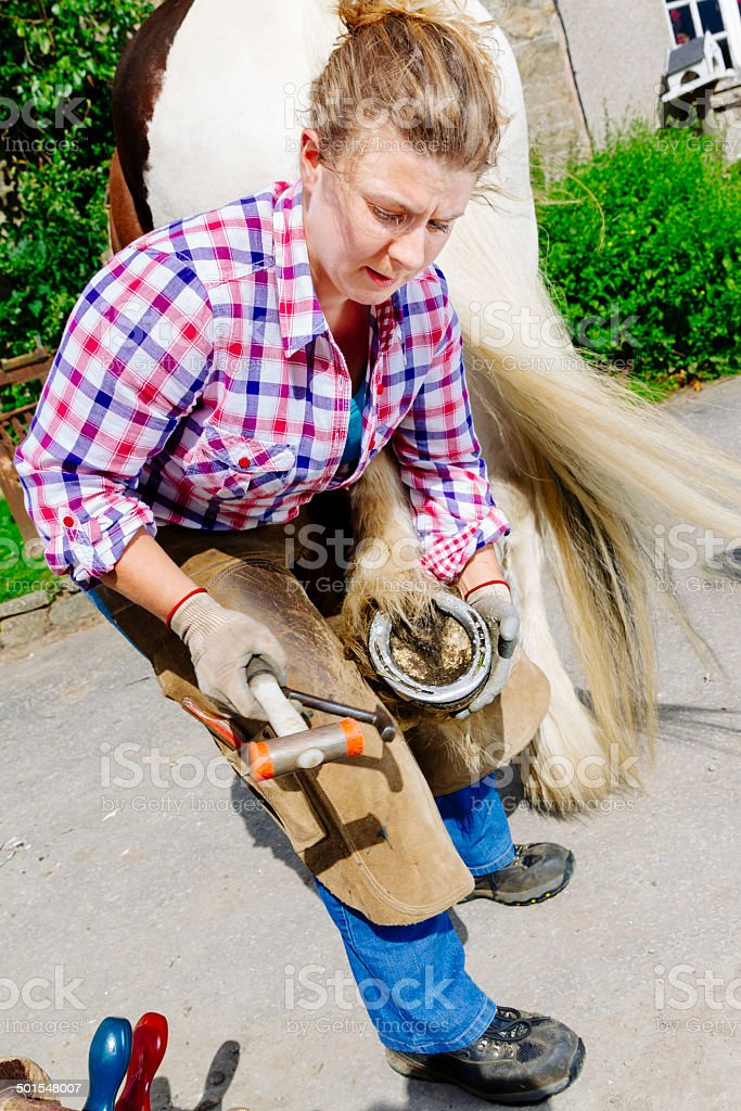 Female farrier shoeing a horse stock photo