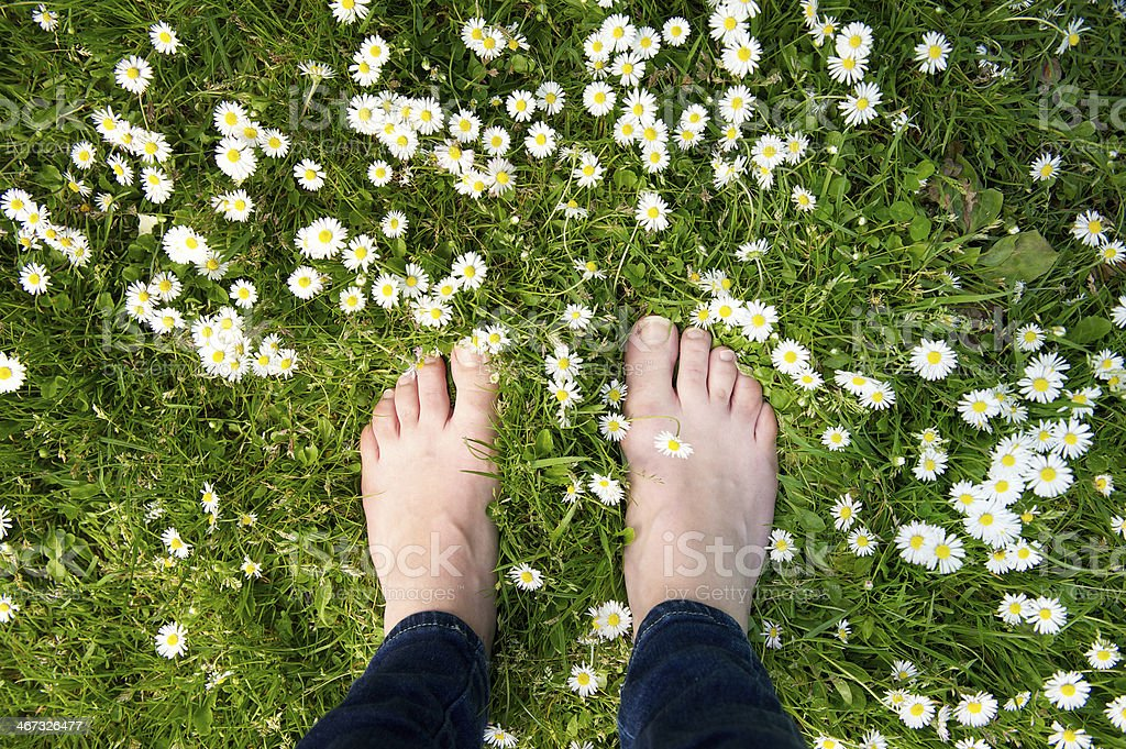 Female feet standing on green grass and white flowers stock photo